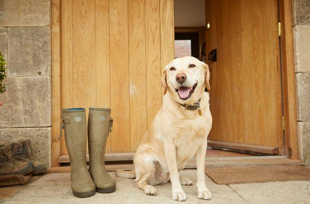 Maisey the dog